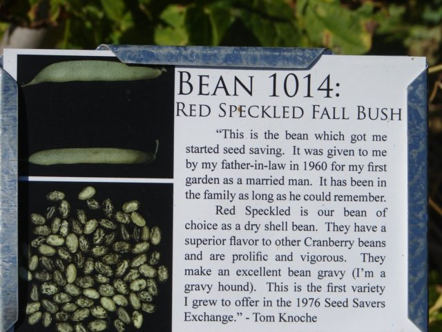 "A picture of a sign for ""Bean 1014: Red Speckled Fall Bush"""
