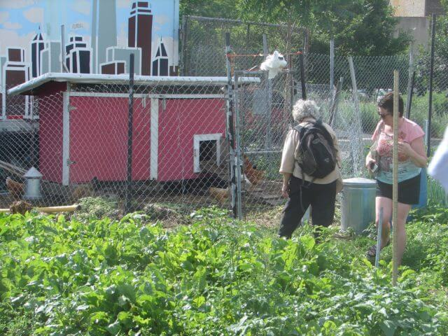 Several people stand behind growing plants looking at a chicken coop.